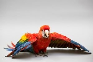 Available Birds for Sale - Petland Waterford Lakes, Florida